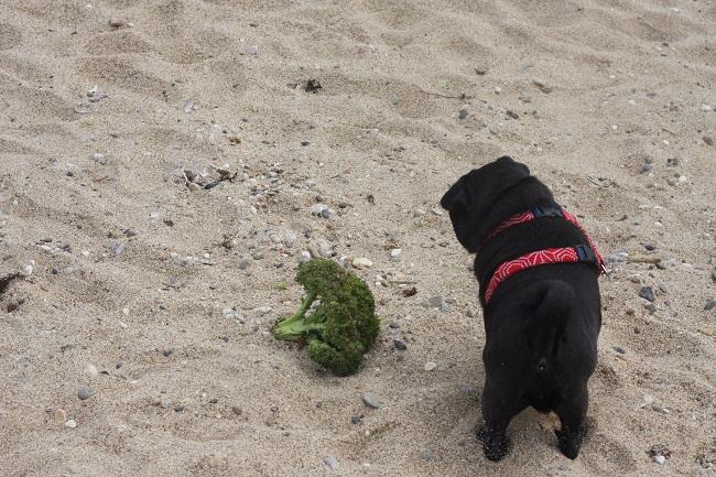 浜にぶっころり