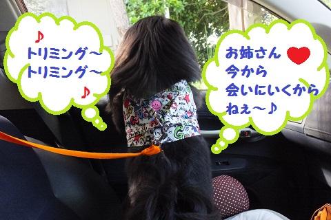 20130531mu1.jpg
