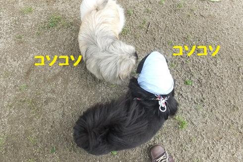 20130615mu21.jpg