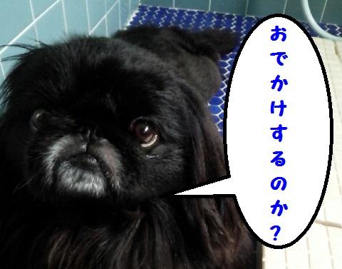 20130706mu4.jpg