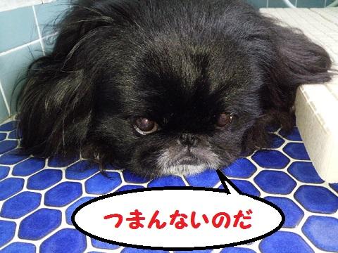 20130706mu6.jpg