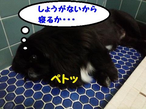 20130706mu7.jpg