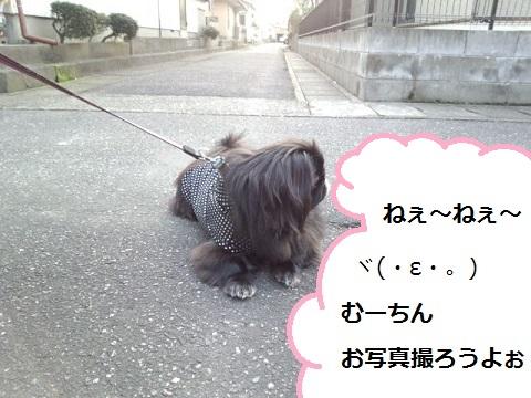 IMG_20130324_172131.jpg