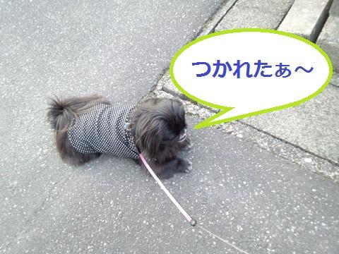 IMG_20130324_172148.jpg
