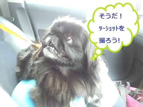 IMG_20130326_112753.jpg