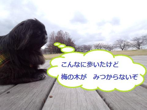 IMG_20130326_115147.jpg