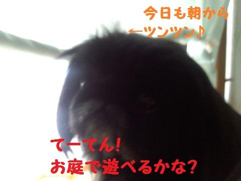 IMG_20130331_090148.jpg