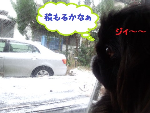 IMG_20130331_090237.jpg