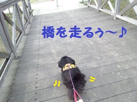 IMG_20130402_151939.jpg