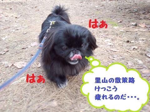 IMG_20130402_153519.jpg