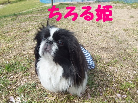 chiroru.jpg
