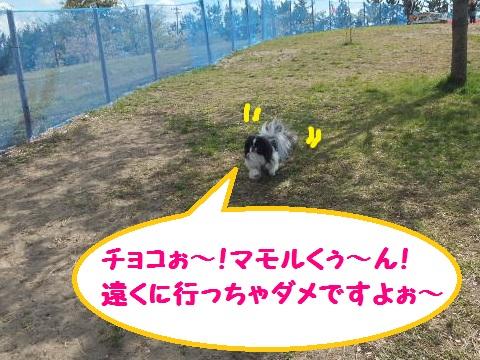 chiroru2.jpg
