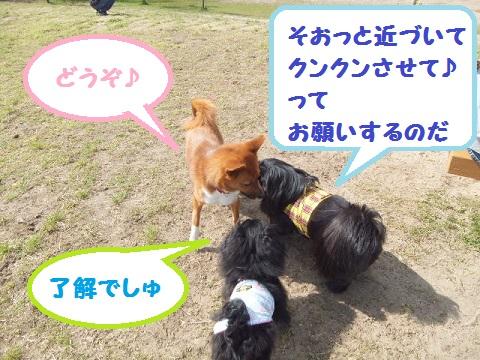 choko5.jpg