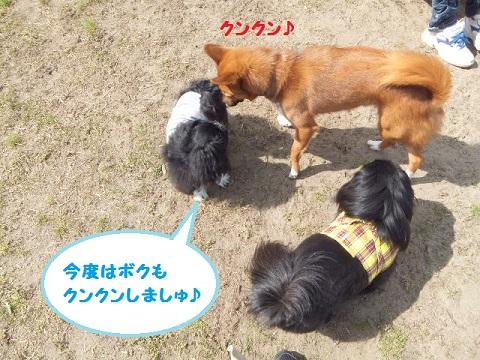 choko6.jpg