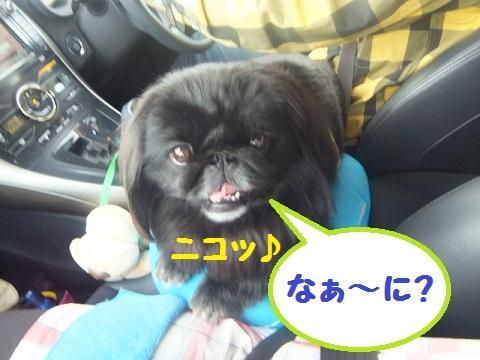 yobu2.jpg