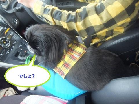 yobu4.jpg