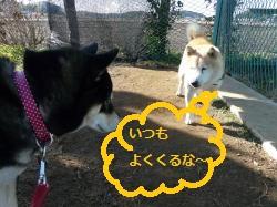 里親犬(仮称:ポチ)