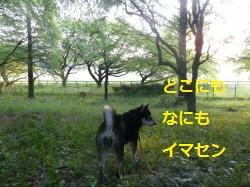 P1200617_convert_20130509112252.jpg