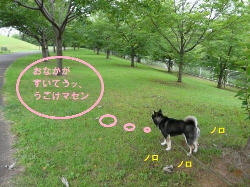P1220768_convert_20130704102000.jpg