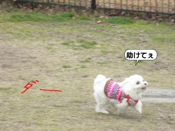こんぴら8 (2)