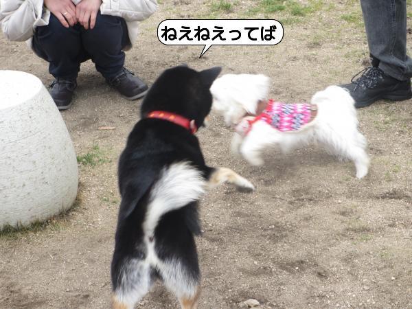 こんぴら15 (3)