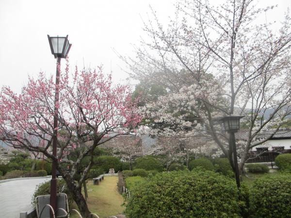 錦帯橋38
