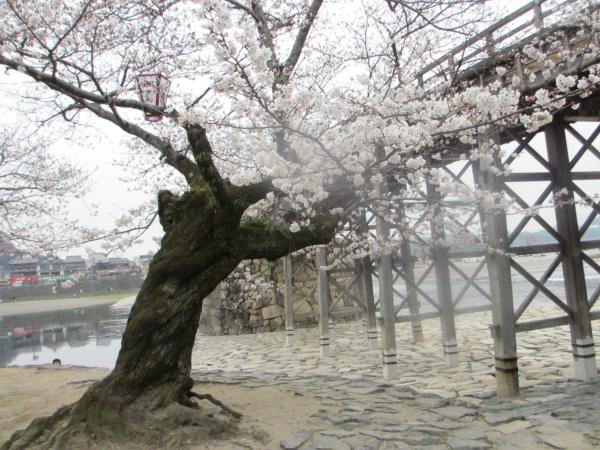 錦帯橋47