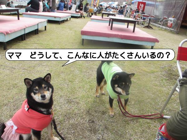 錦帯橋3-1