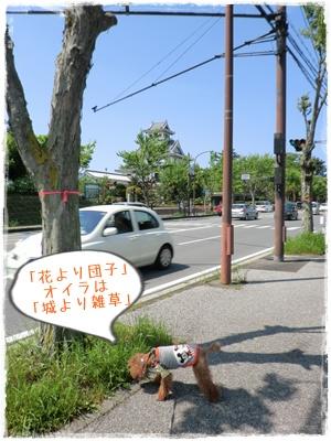 20120505blog4.jpg