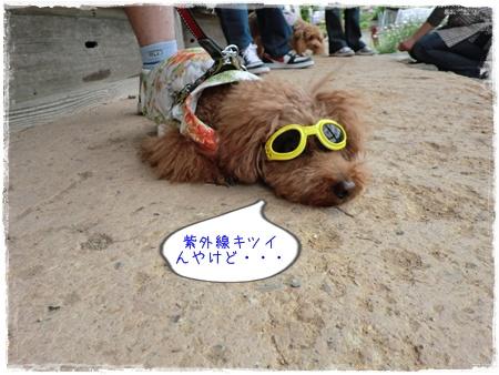 20120520blog23.jpg
