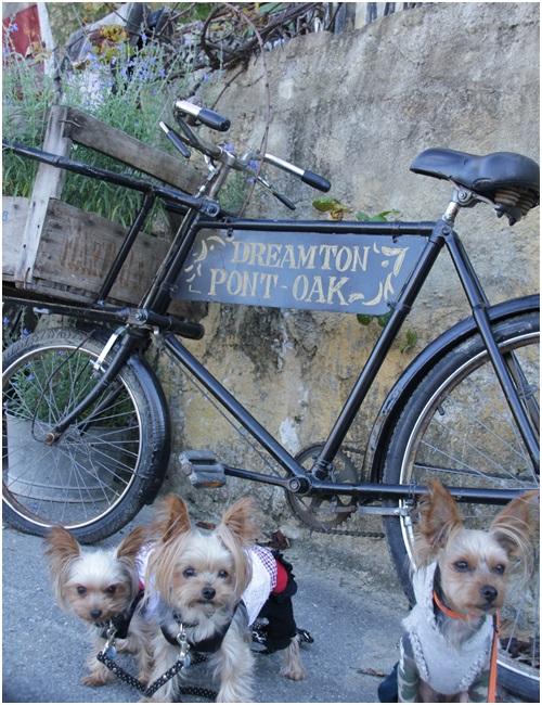 自転車と3ワン