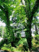 ガーデン5