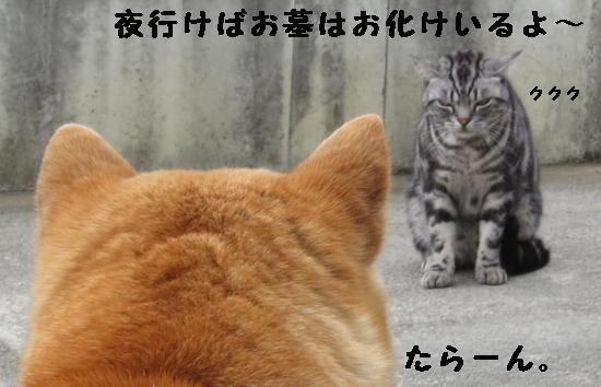 IMG_2765(1).jpg