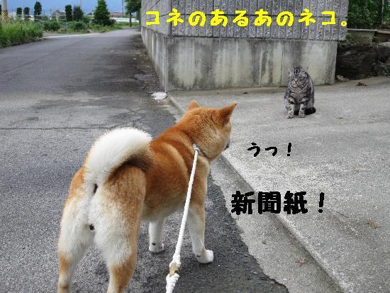 IMG_2770(1).jpg