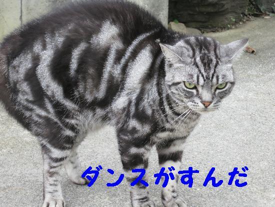 IMG_2771(1).jpg