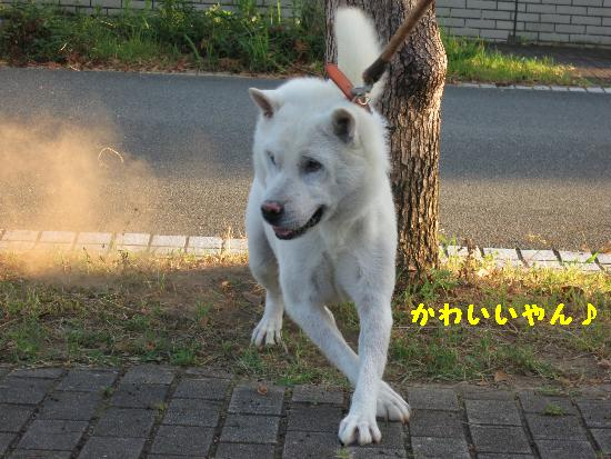 IMG_3985(1).jpg