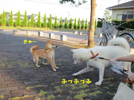 IMG_3992(1).jpg