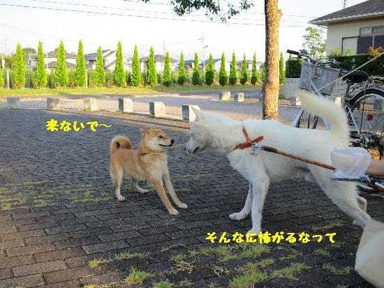 IMG_3994(1).jpg