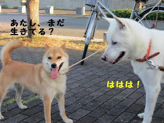 IMG_3997(1).jpg