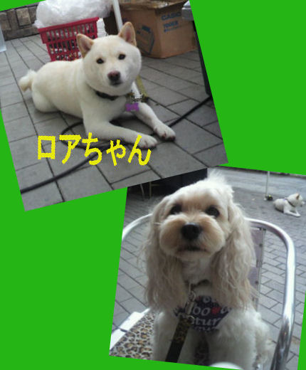 2012.9.2ろあちゃん