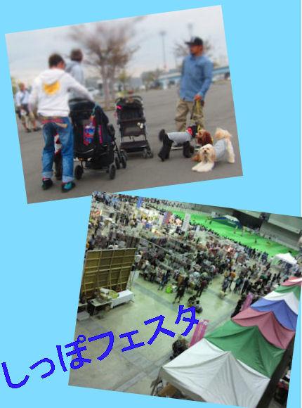 2012.10.14しっぽふぇすた