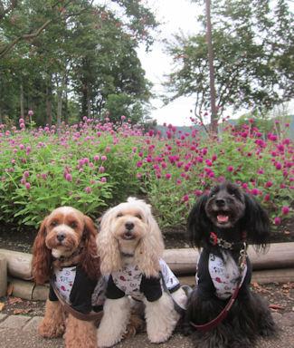 2012.9.22お花と