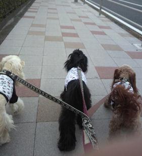 2012.9.22お散歩
