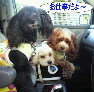 2012.9.27しごとだよ~~