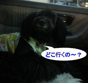 2012.9.27どこ行くの~