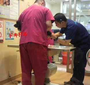 2012.9.27血液検査
