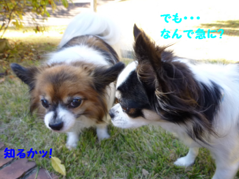 20121029-7.png