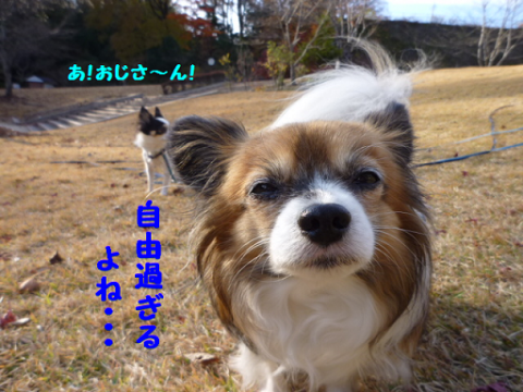 20121129-4.png