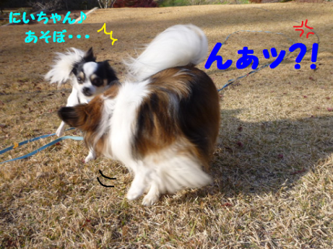 20121129-5.png