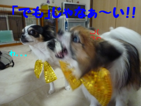 20121211-11.png